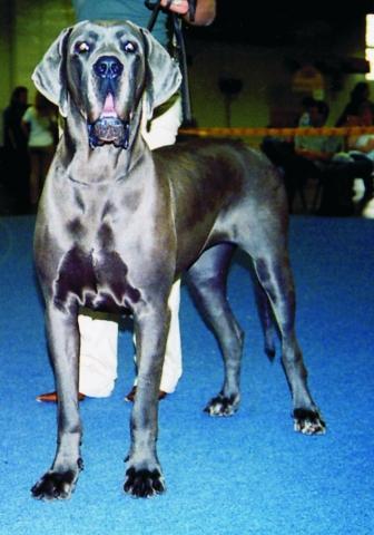 IRMA Dog-Lome