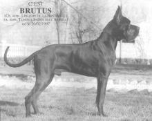 BRUTUS-N