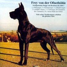 FREY v.d.Ofnethöhle - CIB, Ch.DDC, VDH