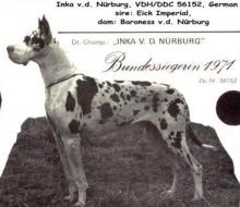 INKA v.d.Nürburg - Ch.DDC