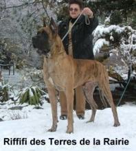 RIFIFI des Terres de la Rairie - CIB, Ch.A, SK, Slo, Chor, H
