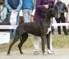 ASCHLEY Elegance Dog - Ch.SK