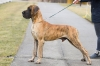 CICERO Pretorian Dog - Ch.SK