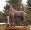 J-CAIRO Apollo Dog